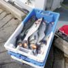 La Sardine Volante, nouvelle poissonnerie ambulante
